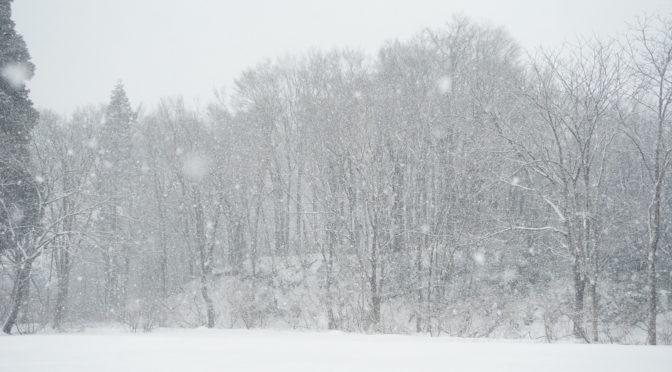 【やっと雪いろ】