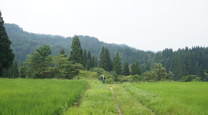 松之山カラー 案山子讃歌