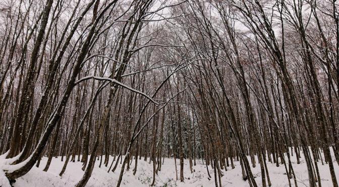 【冬いろ 美人林】