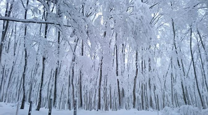~今年の 雪の想い出~