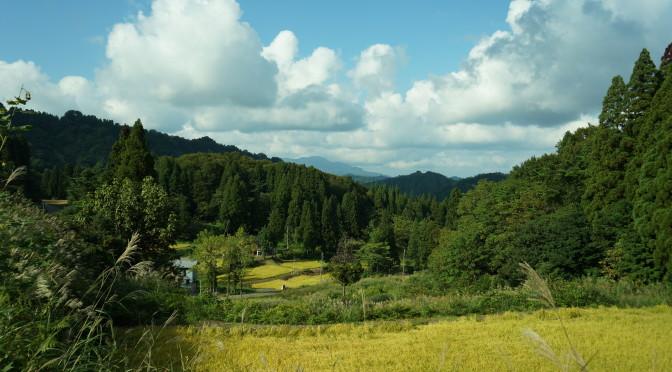 松之山カラー まぶしい!金色