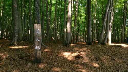 美人林、美しさの秘密