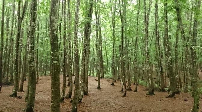 松之山    1人美人林 〜 雨の日に〜
