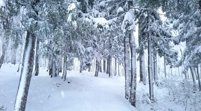 これぞ松之山カラー 冬~ホワイト~