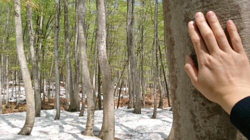 どの美人林も お好き?